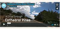 Cathedral Pines Neighborhood Video